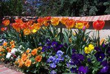 Gardening: Low-maintenance Garden