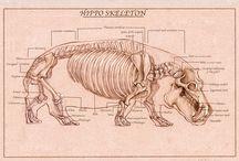 Reference: Animal Anatomy