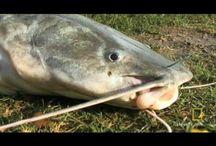 Thailand fishing videos / Fishing video from Fishsiam Thailand