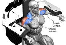 Muscle anatomy-machine and dumbbell