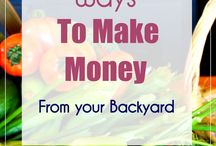 Making money from a homestead