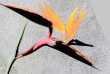 FENIX BIRD?, NO A FLOWER, A MAGIC FLOWER