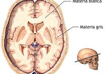Neuro