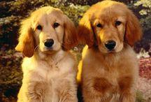 Animals: Dogs 101