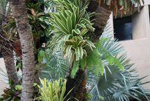 Bromeliad photos