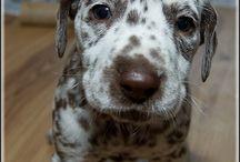 Love at first glance / Cute cute cute