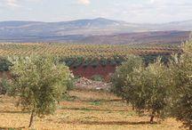 Kilis İli'nde Organik Zeytinyağının Rekabet Gücünün Artırılması Projesi / by UNDP Türkiye