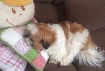 Stitch amigo /  cachorro