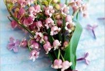 flori preferate