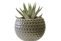 Magnetized Harmony Planters /   Magnetized harmony  planters with live plants