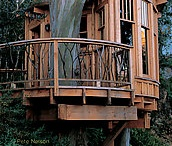 Treehouses / by Ashley Buckle