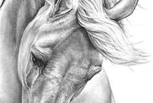 Drawings of horses
