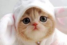 きゃわいい子猫