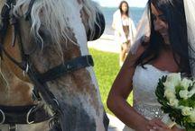 Bridal Horse Shoot
