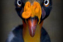 【生物】鳥類