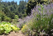 Gardening & Outdoors / by Cherryvale Farms