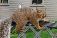 Chester The Squirrel