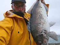 NZ Fishing Guide