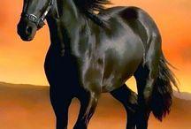 Koně k