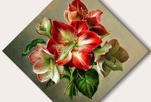 fiori dipinti