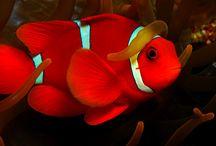 monde aquatique
