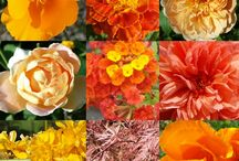Couleur : Orange / Décoration,  objets, jardin : orange