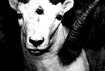 ·I· / sheep