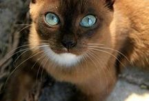 COLORED-EYED