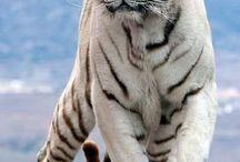szép állatok