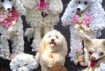 flower poodle