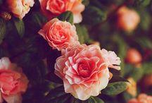 aesthetic| Flourish / just pretty things