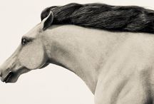 Horse Art / Art works related to horses