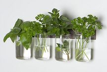 botellas y cristal plantas