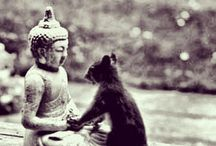 Animal Meditation