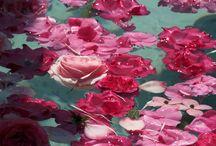 Cali / Roses