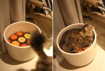 Cat DIY Projects / by Kiira Lyn