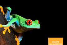 Les animaux du monde / Mignons, fascinants, effrayants... Il y a tant d'animaux à découvrir sur notre belle planète.