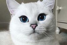 àlom macskàm