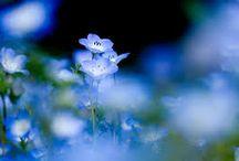Nature / Beautiful