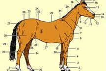 Paarden educatie