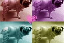 Pugs & Animals