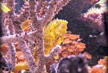 Seahorse / Seahorses Now Available At Aqua Dreams Aquarium. #seahorse