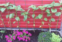 Huis en tuin / Over plantjes en prulletjes