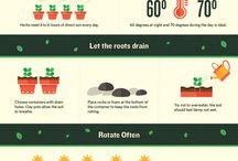 Herb planting
