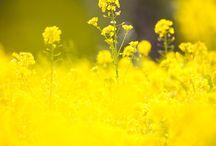 Flowers <3
