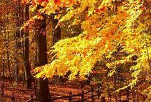 floresta / florestas, caminhos em florestas, flores, arvores, etc.