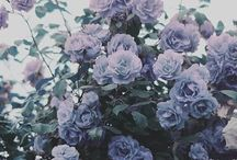 Aesthetich flowers&nature