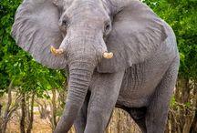 I lovelephants!!!! / all kinds of..... elephants....