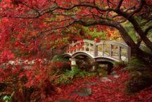 Autumn Inspiration / by Kelly Krueger