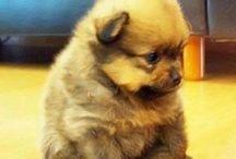 Cute!! / by Kerrie Jones